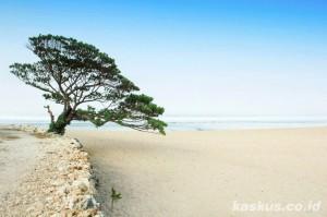 keindahan panorama wisata pantai pok tunggal di jogja
