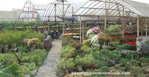 wisata taman bunga cihideung bandung dengan aneka ragam bunga yang indah