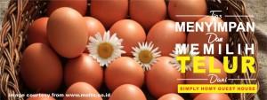 memilih dan menyimpan telur