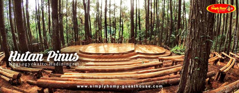 Ternyata Liburan di Hutan Pinus Jogja Asik Juga Lho! Berasa Liburan seperti di Film Twilight