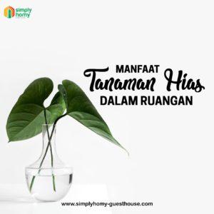 manfaat tanaman hias